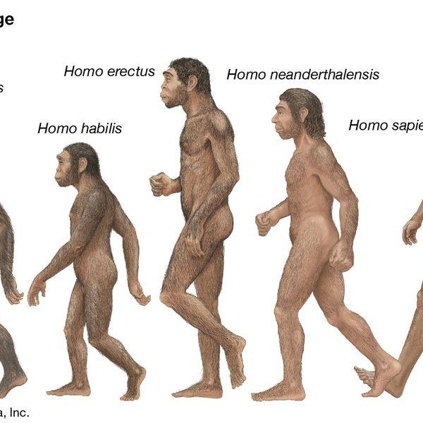 Evolution Of Man Essay Examples