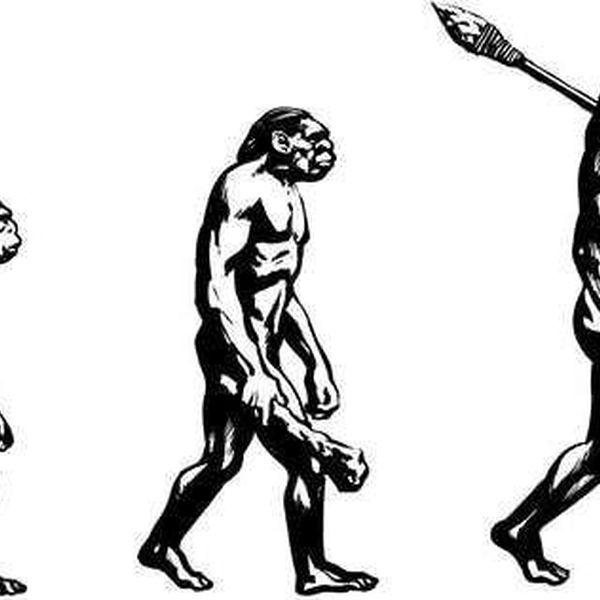 Evolution Essay Examples