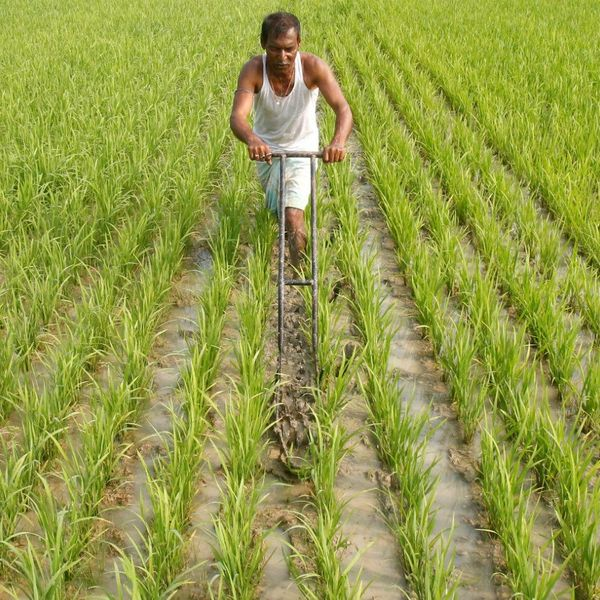 Farmers In India Essay Examples