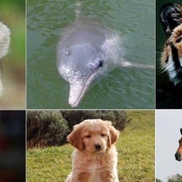 Favorite Animal Essay Examples