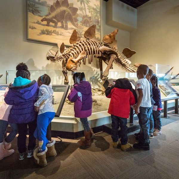 Field Trip To Museum Essay Examples