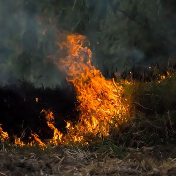 Forest Fire Regenerates The Ecology Essay Examples