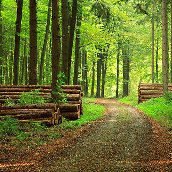 Forest Essay Examples