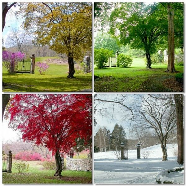 Four Seasons In Pakistan Essay Examples
