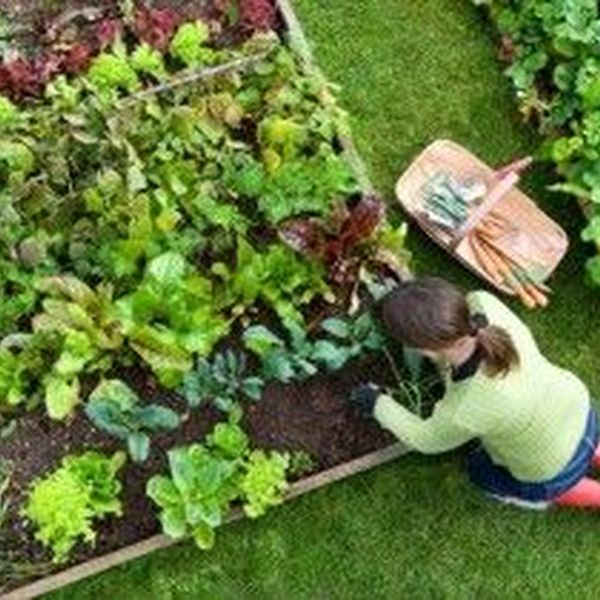 Gardening As A Hobby Essay Examples