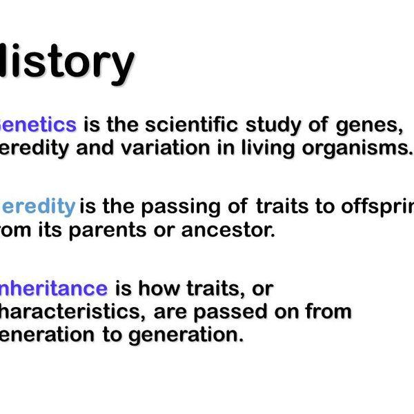Genetics And Heredity Essay Examples