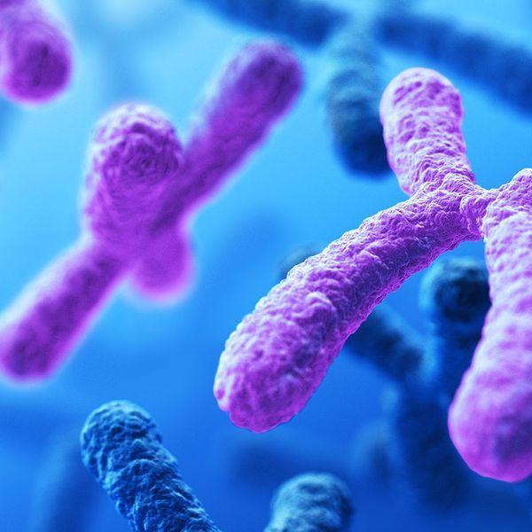 Genetics Essay Examples