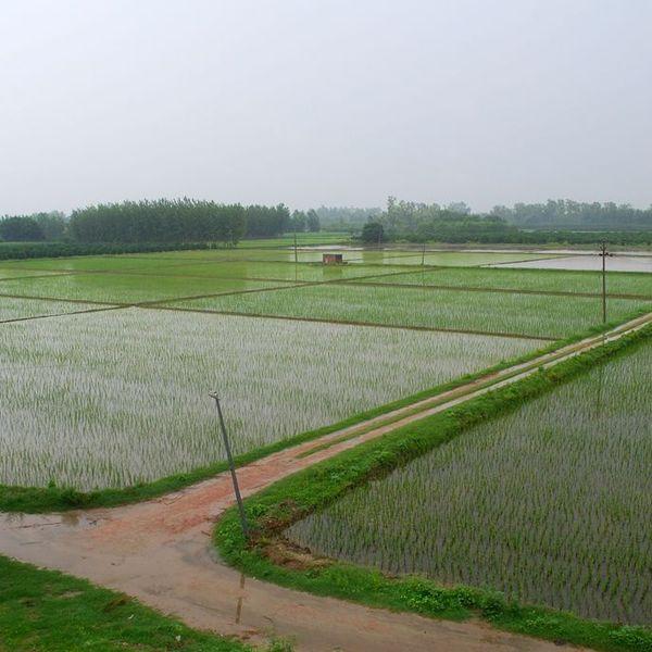 Green Revolution In India Essay Examples