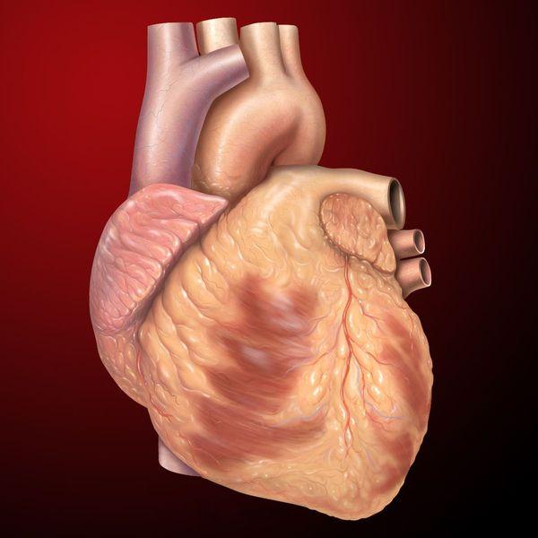Heart Essay Examples