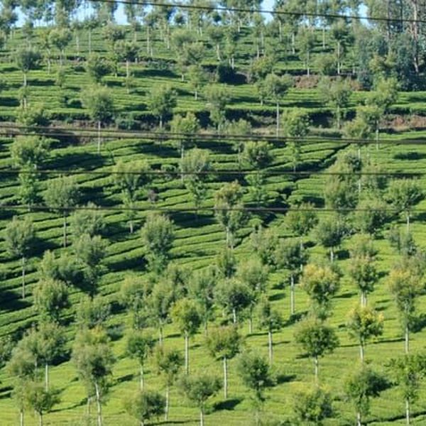 Holiday Trip To Ooty Essay Examples