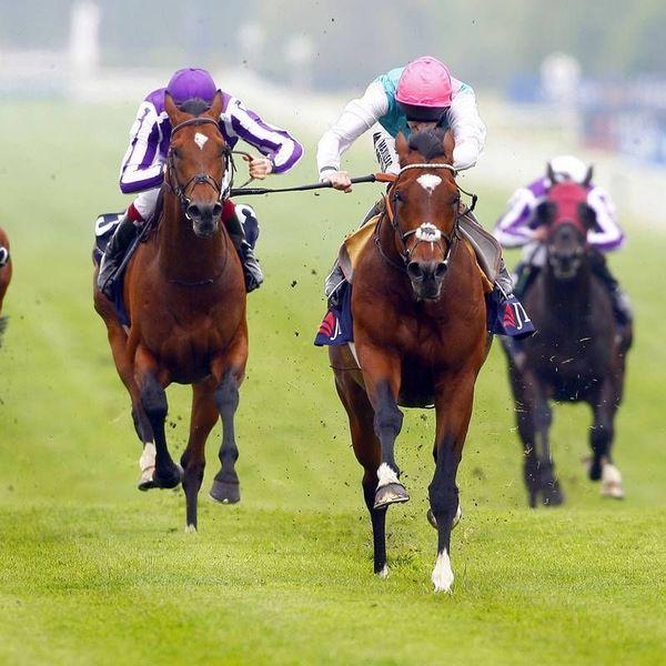 Horse Racing Essay Examples