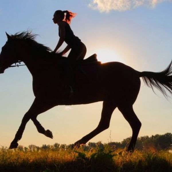 Horse Riding Essay Examples