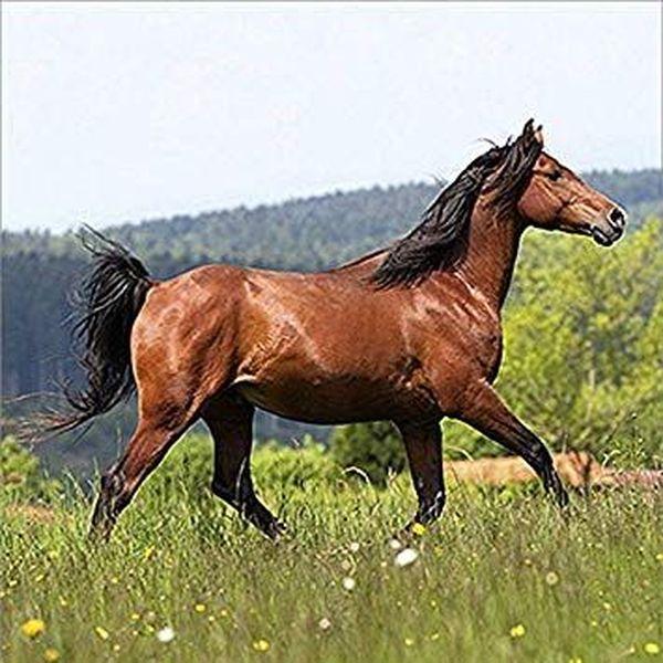 Horses Essay Examples