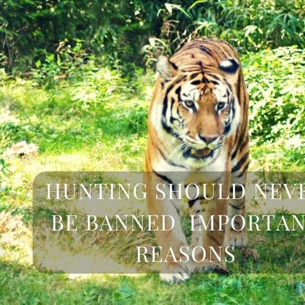 Hunting Should Be Banned Essay Examples