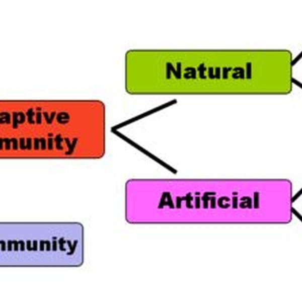 Immunity Essay Examples