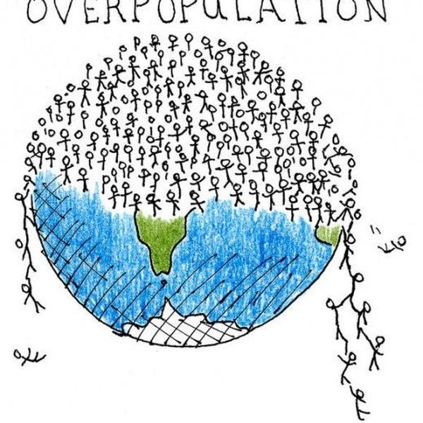 Impact Of Overpopulation Essay Examples