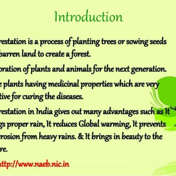 Importance Of Afforestation Essay Examples