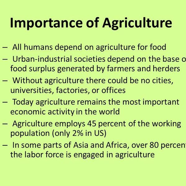 Importance Of Agriculture In Nepal Essay Examples