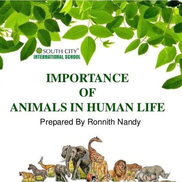 Importance Of Animals Essay Examples