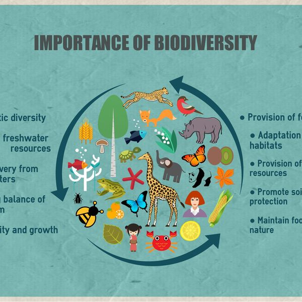 Importance Of Biodiversity Essay Examples