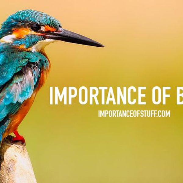 Importance Of Birds Essay Examples