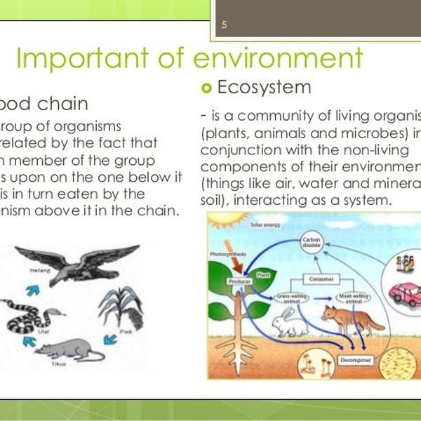 Importance Of Environmental Awareness Essay Examples