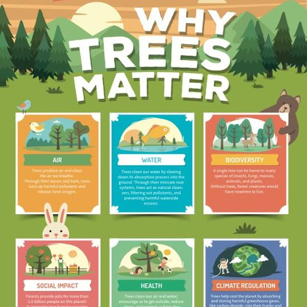 Importance Of Planting Trees Essay Examples