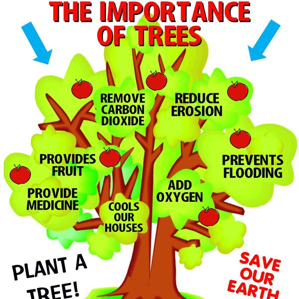 Importance Of Trees And Plants Essay Examples