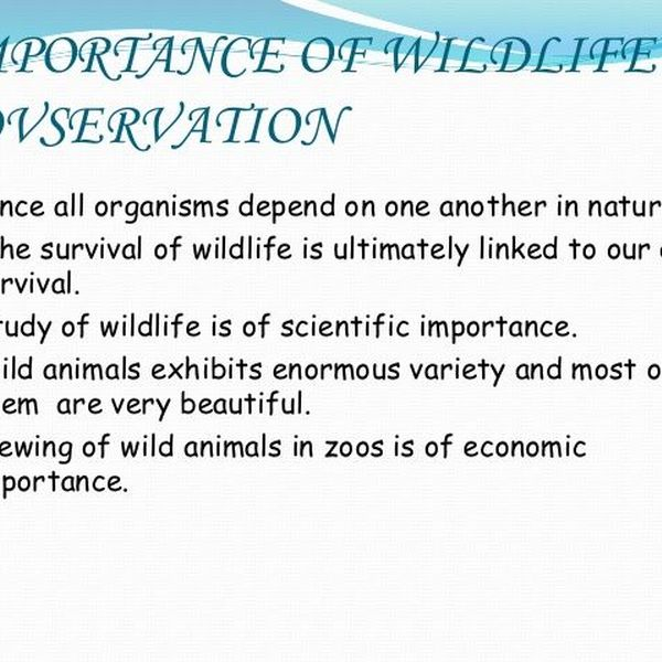 Importance Of Wildlife Conservation Essay Examples