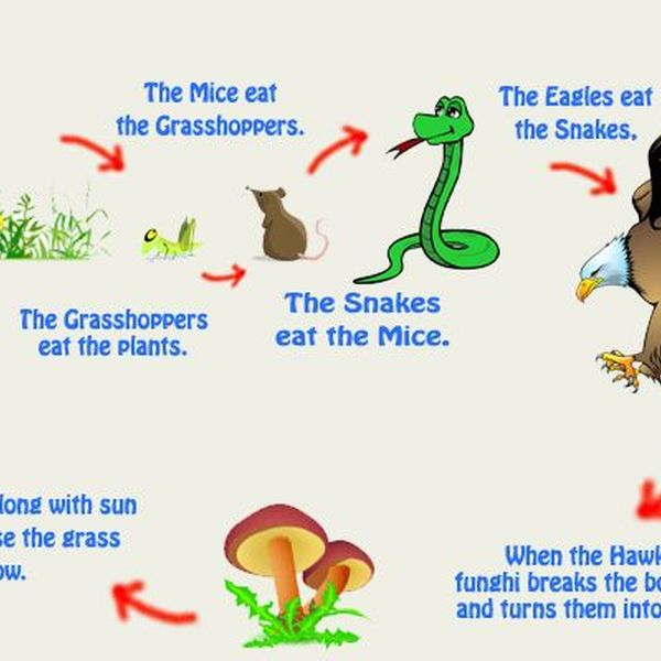 Interdependence Of Plants And Animals Essay Examples