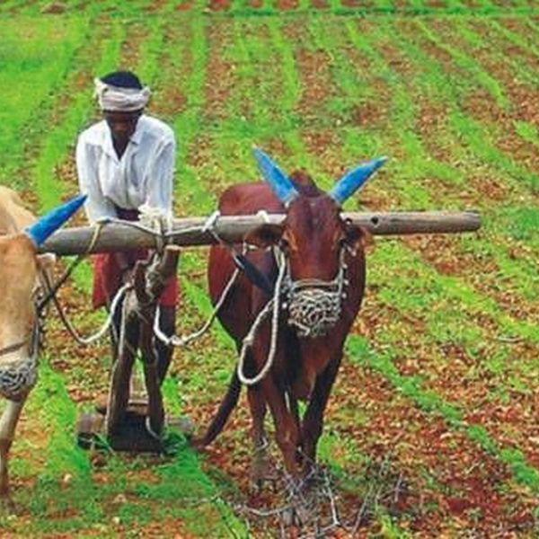 Life Of A Farmer Essay Examples