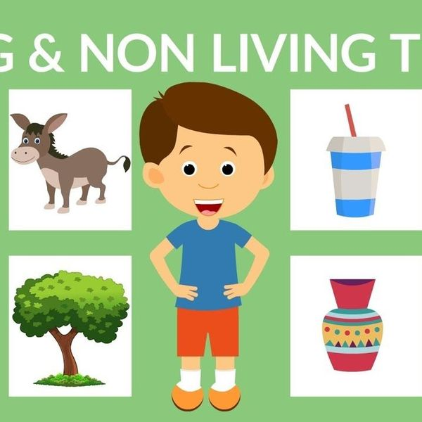 Living And Nonliving Things Essay Examples