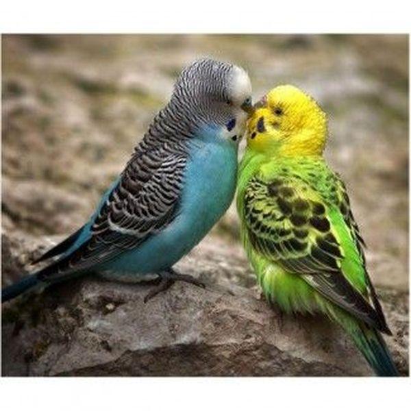 Love Birds Essay Examples