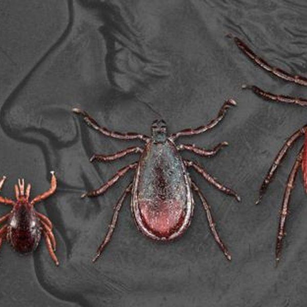 Lyme Disease Essay Examples