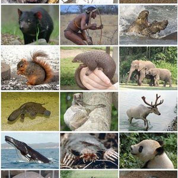 Mammals Essay Examples