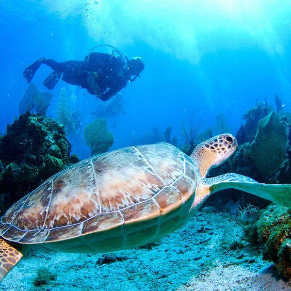 Marine biology essays examples of procedural essays