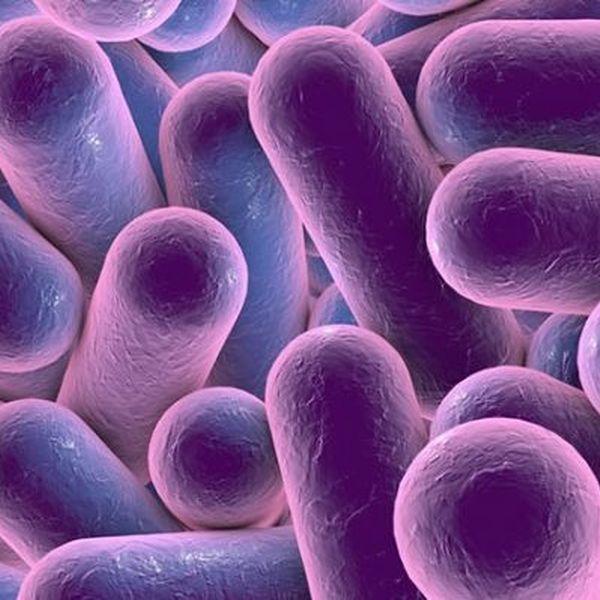 Microorganisms Essay Examples