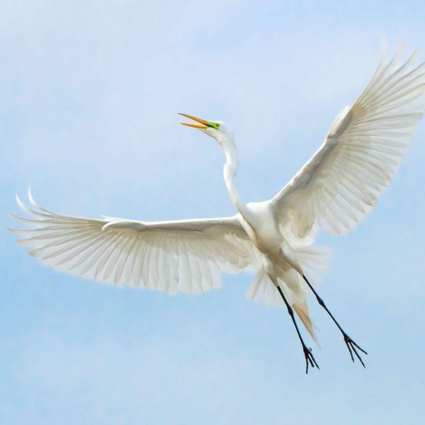 Migratory Birds Essay Examples