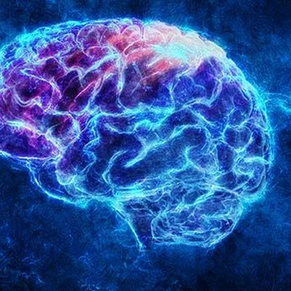 Mind Essay Examples