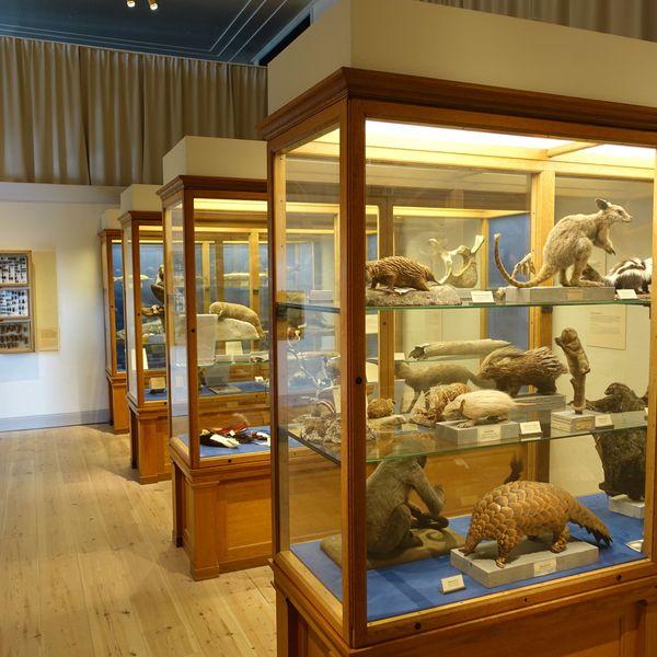 Museum Essay Examples