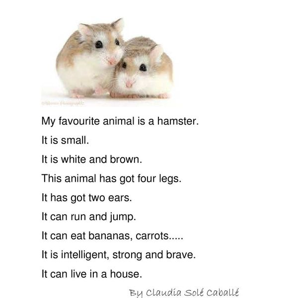 My Favourite Animal Essay Examples