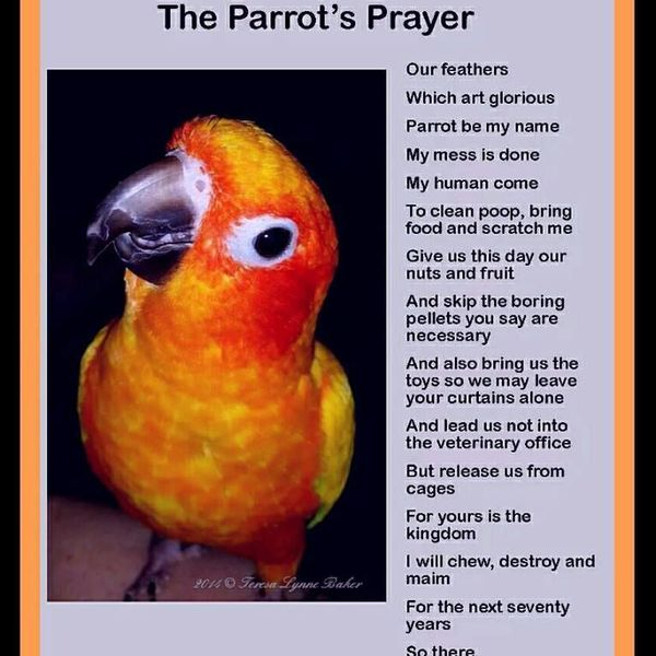 My Pet Bird Parrot Essay Examples