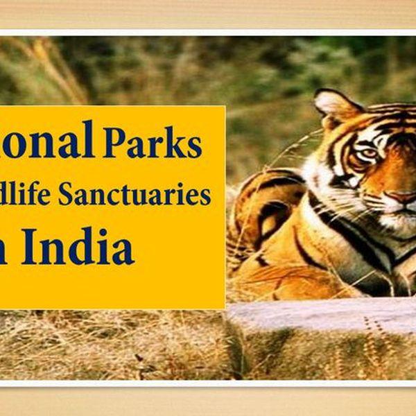 National Park And Sanctuaries Essay Examples