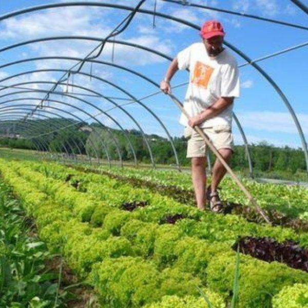 Organic Farming Essay Examples