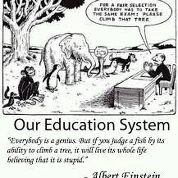 Our Education System Essay Examples