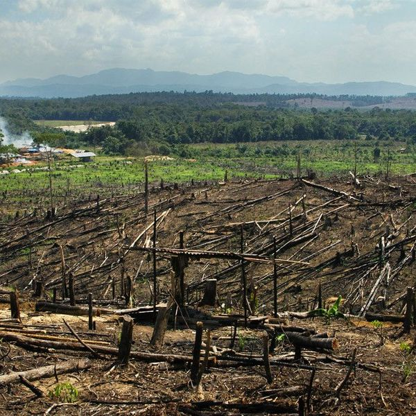 Overpopulation And Deforestation Essay Examples