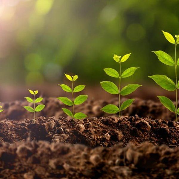 Plant Growth Essay Examples