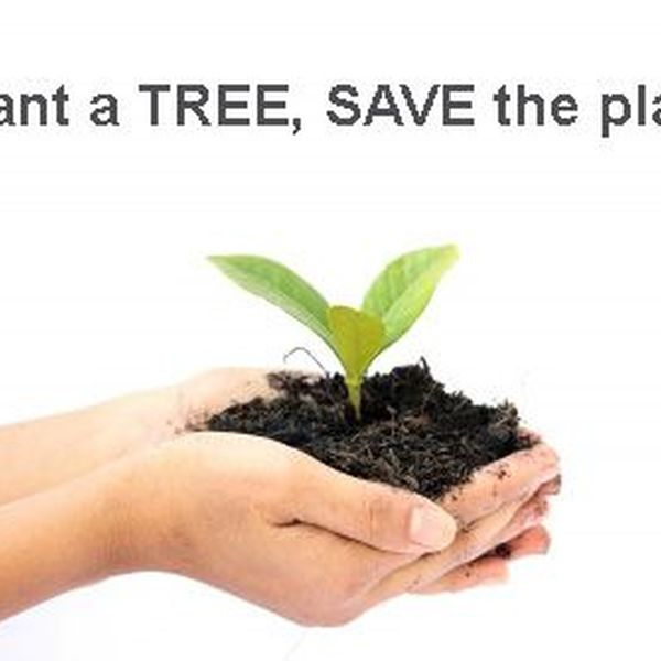 Plant Trees Save Earth Essay Examples