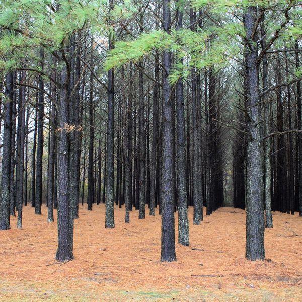 Plantation Essay Examples