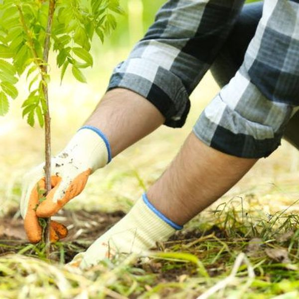Planting Trees Essay Examples